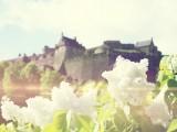 城堡前的小白花