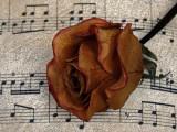 凋謝玫瑰與音符