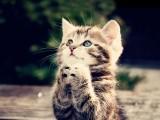 小猫的祈祷