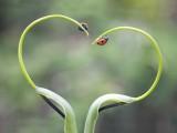瓢虫的爱情