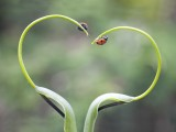 瓢蟲的愛情(qing)