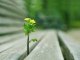 木椅缝的小花