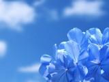 天空與藍色花朵