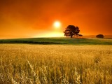 大自然美景