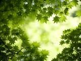 綠葉(ye)幽幽