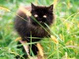 驚恐的小貓