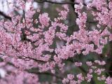盛放的花朵