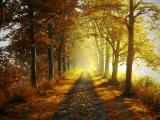深秋的早晨