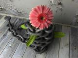 粉红色非洲菊