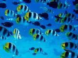 海底魚(yu)群
