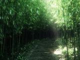 阳光下的绿色林地