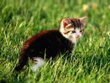 草丛中的猫咪