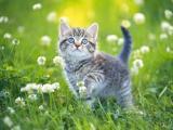 花丛中的猫咪