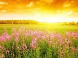 阳光下的花儿