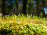 綠苔的生命力