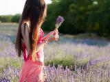 孤独的薰衣草女孩