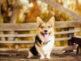 狗狗的(de)秋天