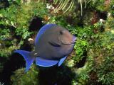 蓝色的小鱼