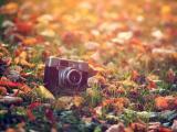 秋天的紀念