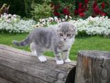 木桩上的小猫咪