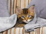 怕冷的貓咪