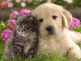 猫狗一家亲