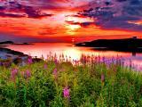 最美夕陽紅