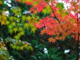 亚洲十大旅游城市京都枫叶