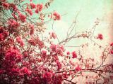 盛開的花朵