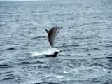 飛躍的小海豚