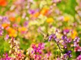 蝴蝶的缤纷世界