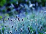 紫色花兒的憂傷